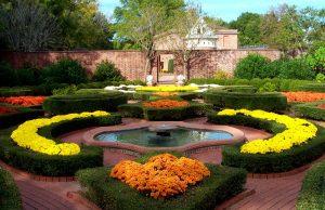 latham_garden-mums